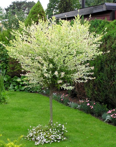 träd till trädgården